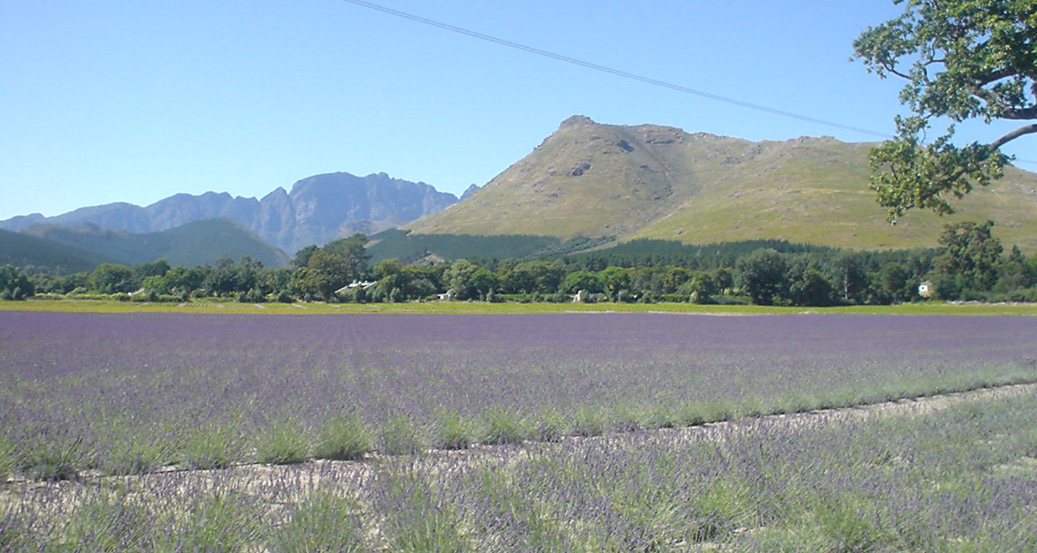 Happy Valley Accommodation in Franschhoek